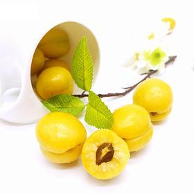 【半野生珍珠杏】 20°香甜 饱满多汁 尝鲜期仅10天 市面买不到 小白杏