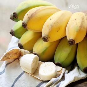 食当季  苹果蕉(香蕉)皮薄如纸  丝滑香甜 (5斤装)