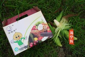 【海宁购·寻美食】夏季必备 糯软香甜丁桥玉米6斤装 (礼盒装),每天现摘超新鲜