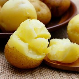 恩施富硒土豆 老式品种 非转基因 口感软糯 现挖现发