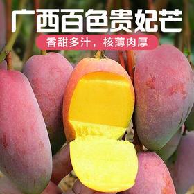 【贵妃8斤送1斤】广西百色贵妃芒果中贵妃新鲜水果农家现摘现发8斤装