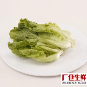 生菜 新鲜蔬菜火锅涮菜板式烧烤食材 精选150克-835404
