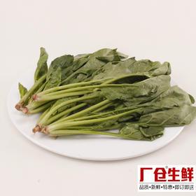 菠菜 新鲜蔬菜火锅涮菜板式烧烤食材 精选150克-835403