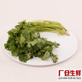 香菜 新鲜蔬菜火锅涮菜板式烧烤食材 精选100克-835408