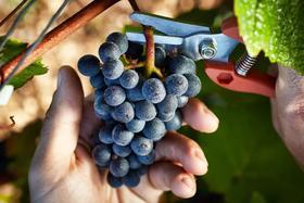 【成都】8月25日 知味成都盲品课程:区域红葡萄品种的分辨秘籍