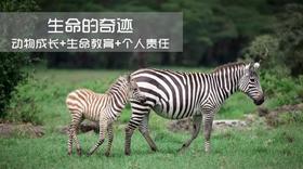 【夏令营】生命的奇迹,4天3夜去发现动物与我们生命的奥秘!