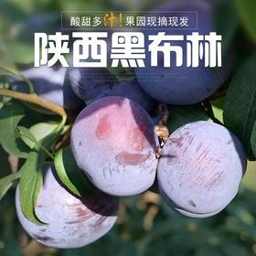 陕西黑布林李子现摘现发 新鲜水果酸甜多汁应季水果 4.5斤-5装包邮