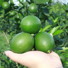 海南青柠檬  青皮的柠檬更酸爽哦  两片一杯  清凉一夏  喝出健康好生活 产地直发