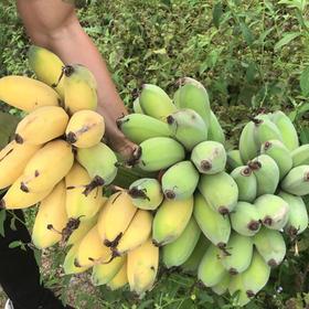 香甜粉糯农家苹果蕉5斤