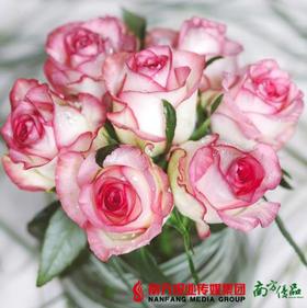 ❤优品鲜花周一见❤精品爱莎玫瑰 5枝 【拍前请看温馨提示】
