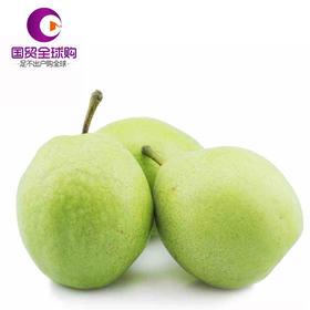 陕西早酥梨5斤12-15个