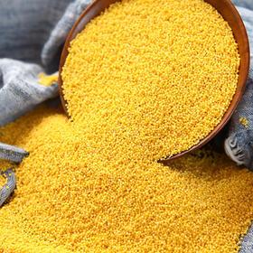 优选|陕北米脂小米 农家月子米 养胃养颜 现磨现发 5斤装