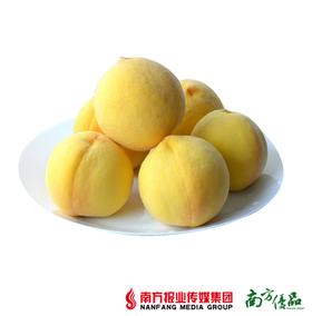【汁甜如蜜】山东特级黄金水蜜桃 4个(单果约200g)【拍前请看温馨提示】