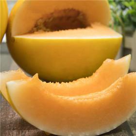 民勤蜜瓜 沙漠中的黄金瓜 金红宝蜜瓜 甜蜜爽口多汁 皮薄肉厚  约8斤装