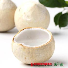 【味甜多汁】 泰国进口 椰皇椰子 【拍前请看温馨提示】