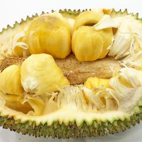 【榴莲蜜】海南特产 热带水果新宠  果肉柔软芬芳 独特可口 香味浓郁 不可错过的美味!