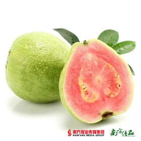 【富含维生素C】台湾进口 红心芭乐番石榴 4个【拍前请看温馨提示】
