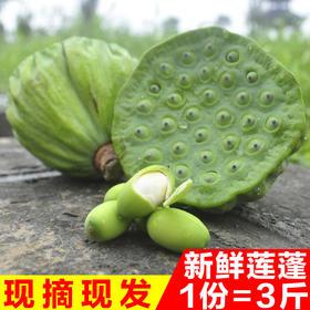 楚味堂新鲜莲蓬3斤装冰袋泡沫盒发货