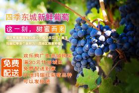 四季东城  新鲜水果  多品种葡萄个大汁多 什邡城区免费配送