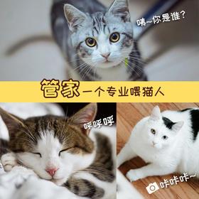 """""""管家""""一个专业喂猫人 上门喂养照顾猫咪200元/次"""
