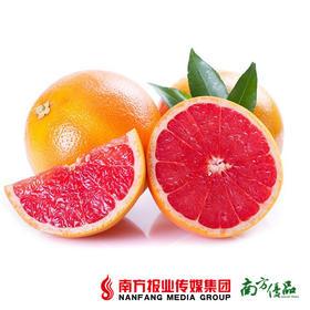 【维C爆棚】南非进口 新鲜血橙  (约200-300g一个)【拍前请看温馨提示】