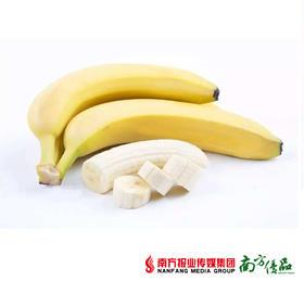 【香甜软糯】老挝进口 大香蕉 【拍前请看温馨提示】