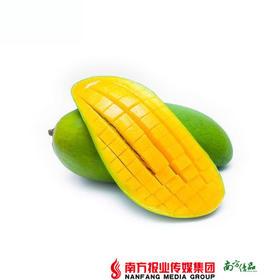 【肉多核小】广西桂七芒果4斤 (单果120-260g)【拍前请看温馨提示】