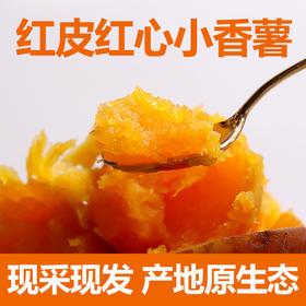 湖北特产农家小红薯5斤 现采现挖红皮红心板栗小香薯紫薯地瓜包邮