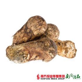 【高营养、纯天然】云南香格里拉鲜松茸 2斤/盒【拍前请看温馨提示】