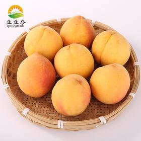 建德本地 桃子应季水果 现摘现发 5斤包邮