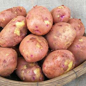云南高原小土豆 10斤