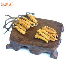 咏芝元冬虫夏草实惠断草,营养价值不变,自己吃吃很划算