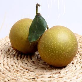 新鲜砂梨现摘直发农谷华梨非黄花梨皇冠水晶酥梨沙梨子5斤装包邮