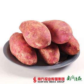【香软甜糯】本地西瓜红红心番薯 5斤【珠三角地区包邮】