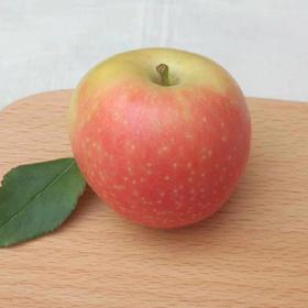 【2018当季苹果】山西运城嘎啦苹果 2018年第一只苹果 不打蜡应季新鲜水果 产地直邮