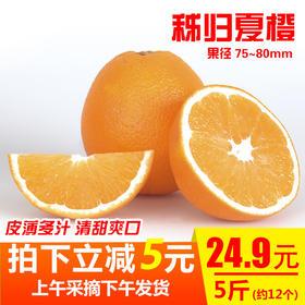 秭归夏橙新鲜水果橙子甜橙非脐橙伦晚当季现采橙孕妇榨汁5斤包邮