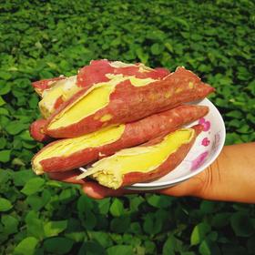 【临潼板栗红薯5斤】| 香糯清甜的红薯,来自大自然的馈赠
