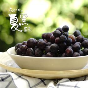 【仅供上海】东方黑珍珠 南汇夏黑葡萄