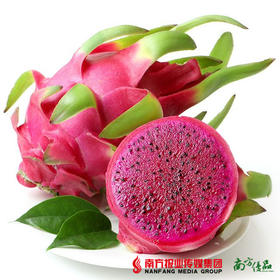 【口感清新啖啖肉】越南进口 红心火龙果 4个 (约450-600g/个)【拍前请看温馨提示】