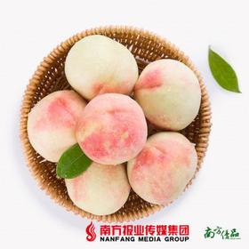 【桃香浓郁,口感甜脆】山东水晶水蜜桃 中果 5斤 【拍前请看温馨提示】