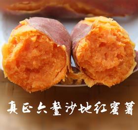 【第二件减5元】现挖现发 福建红心 六鳌蜜薯 真正的海沙地种植 带咸味的网红番薯