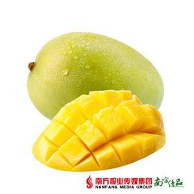 【芒果巨无霸】广西凯特芒果 约6-6.5斤/箱【拍前请看温馨提示】