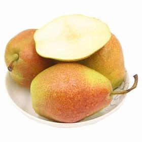 从一片梨园爱上香酥早熟梨五斤装