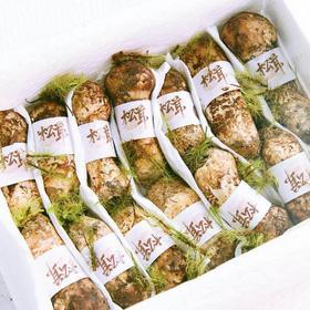 帮卖精选 来自云南的新鲜松茸 质地细腻 香郁白嫩 抗衰养颜必备精品 每个7-9cm  顺丰包邮到家