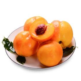 山东黄油桃脆甜现摘现发孕妇水果新鲜包邮当季批发现货桃子