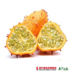 【网红水果尝新】甘肃火参果 大果 1个(约250g-375g/个)【拍前请看温馨提示】