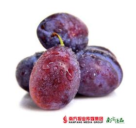 【果味浓郁】新疆法兰西西梅 1斤 【拍前请看温馨提示】