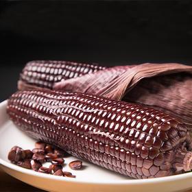 精选 |【热销超过10000根】原生态黑糯玉米 出奇的香甜软糯 非转基因 真空包装 10根