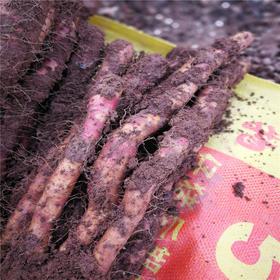 【300年老字号,古法种植,绝不施膨大剂】温县文元裕  三百年老字号 地道铁棍山药5斤装包邮