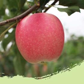 嘎啦苹果10斤 新鲜水果现摘苹果